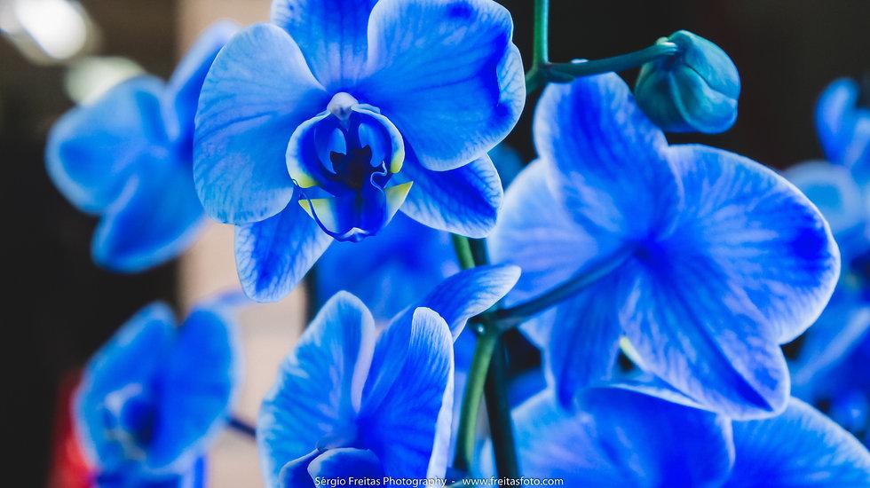 Foto de Flores feita por Sérgio Freitas