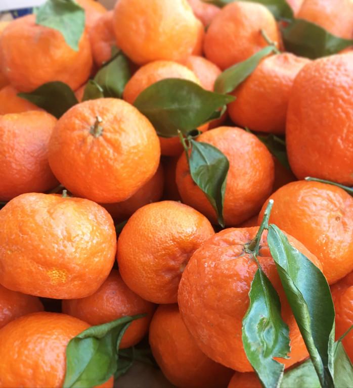 Citrus: Better Than Ambrosia