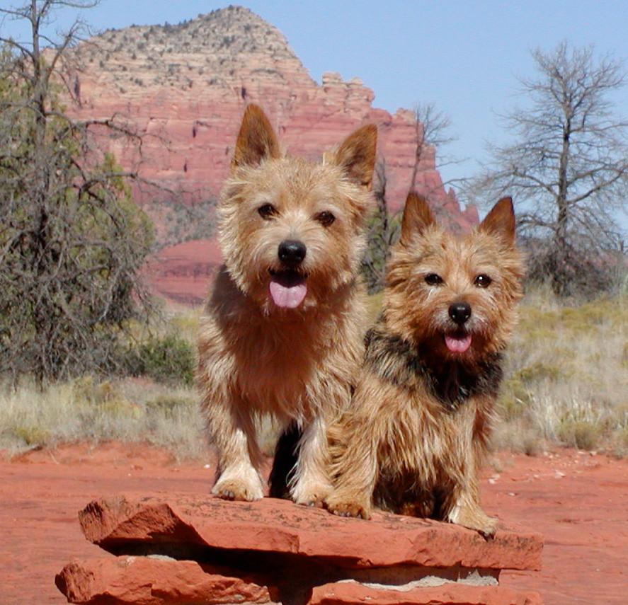 Nigel and Divot hiking in Sedona AZ