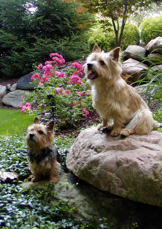 Divot and Nigel in the shade garden
