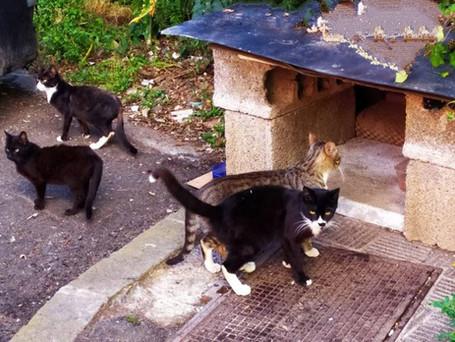 """El """"eficaz"""" método de La Orotava para controlar a los gatos callejeros"""