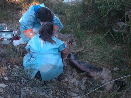 Investigado un vecino de Soria por matar a dos perros de caza y arrojarlos al río Duero