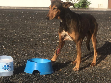 """Consternación en Teguise por el asesinato de Timple: """"Ese perro era un pedazo de pan"""""""