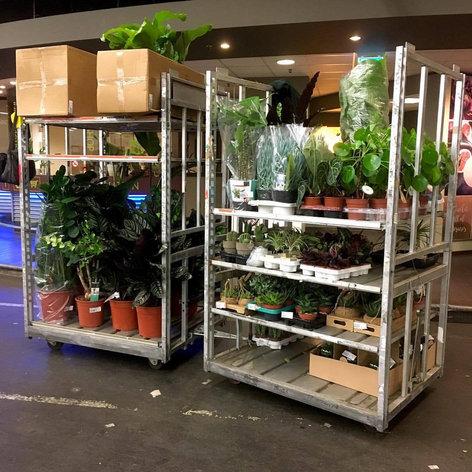 planten shoppen waterdrager interieur st
