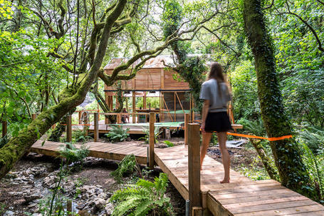 Landscape design of timber walkways amongst trees