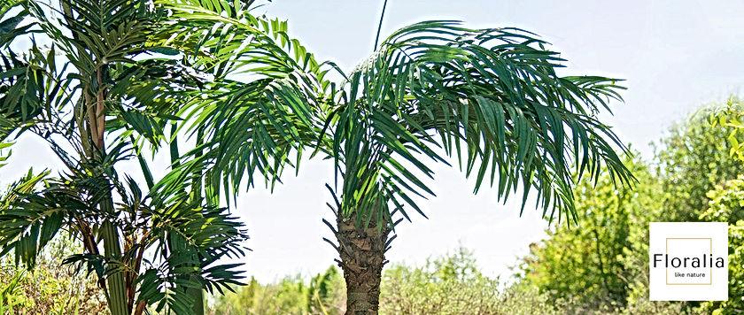 Palmbäume.jpg