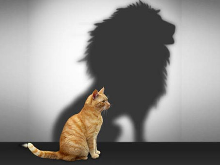 The Pillars of Resiliency: Self-Confidence