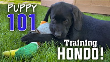 New Puppy! Training Wingmen's New Team Member #PuppyProject