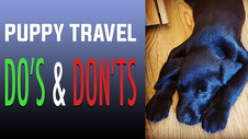 Traveling With A Puppy: Do's and Don'ts