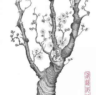 Armeniaca mume Sieb.var.tortuosa T.Y.Chen et H.H.Lu