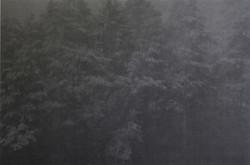 Wald III Locus amoenus