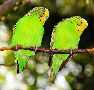 birds-1281783_1920.jpg