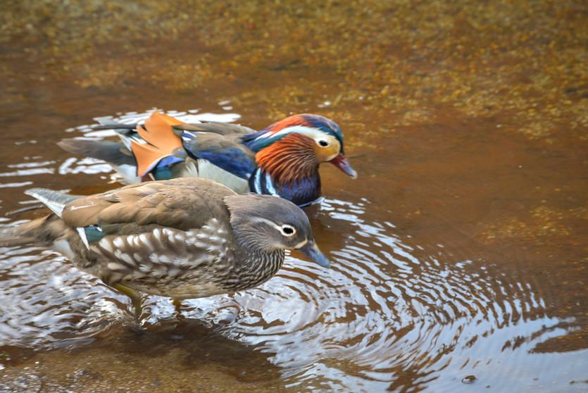 「上高地 春から夏へ」写真展 組写真 鳥 編
