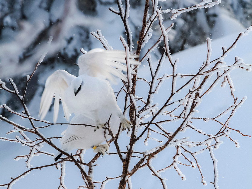 「上高地 秋から冬へ 」写真展 後編