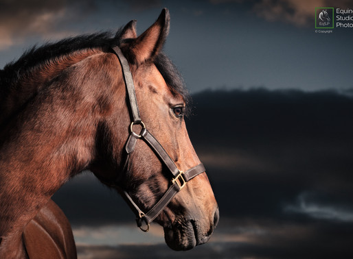Equine Photography & Covid-19