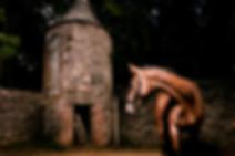 EqSP Equine Studio Photography, horse photography, Equine Photography, Horse Portraits, Horse Portrait Services, Horse photoshoot, Equine portraits, equine photoshoot, equine photography services, professional horse photographer,  professional equestrian photoshoot,