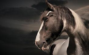 EqSP Equine Studio Photography, horse photography, Equine Photography, Horse Portraits, Horse Portrait Services, Horse photoshoot, Equine portraits, equine photoshoot, equine photography services, professional horse photographer, professional equestrian photoshoot, horse photographer, equine photographer, equestrian photography