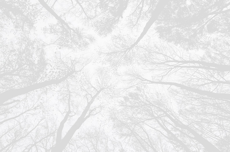 Trees_edited_edited_edited_edited.jpg