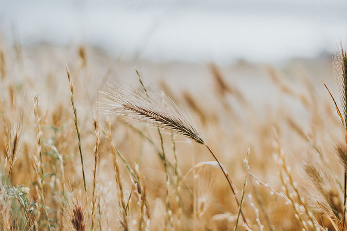 agriculture-blur-close-up-countryside-45