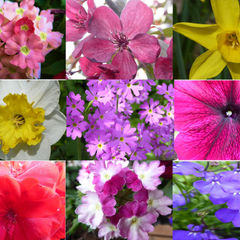 'The Colours of Spring'