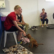 Personalised Puppy Dog Training Adelaide