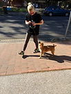 Dog Walking Dog Puppy Training Adelaide