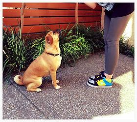 Personalised Puppy Dog Training Adelaide