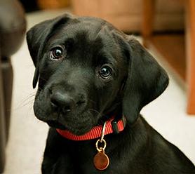 Dog Training Adelaide / Puppy Training Adelaide