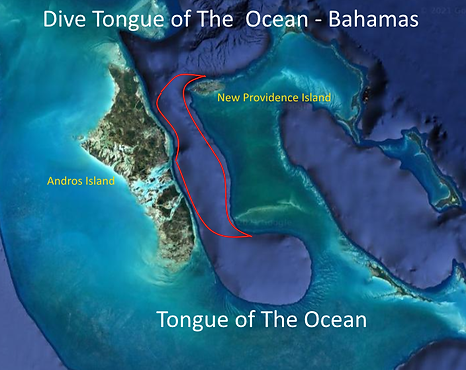 Tongue of The Ocean.png