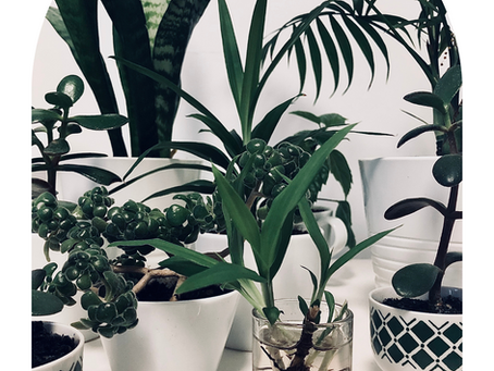 Plantas da casa: guia de rega