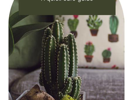 Succulent Love: A quick care guide