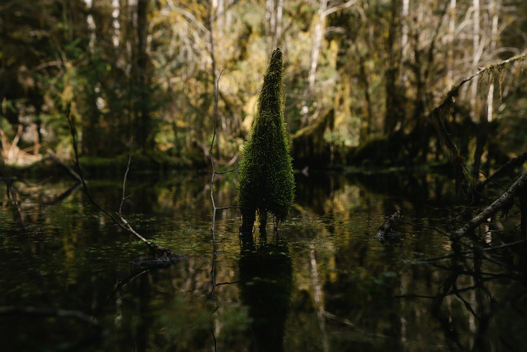 nature_washswamp.jpg
