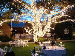 wedding-tree-wrap.jpg