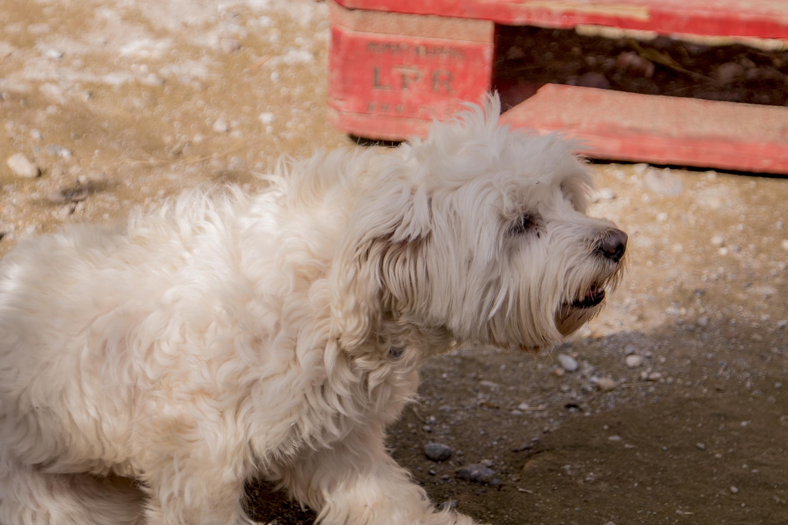 Pension pour chiens Marrakech