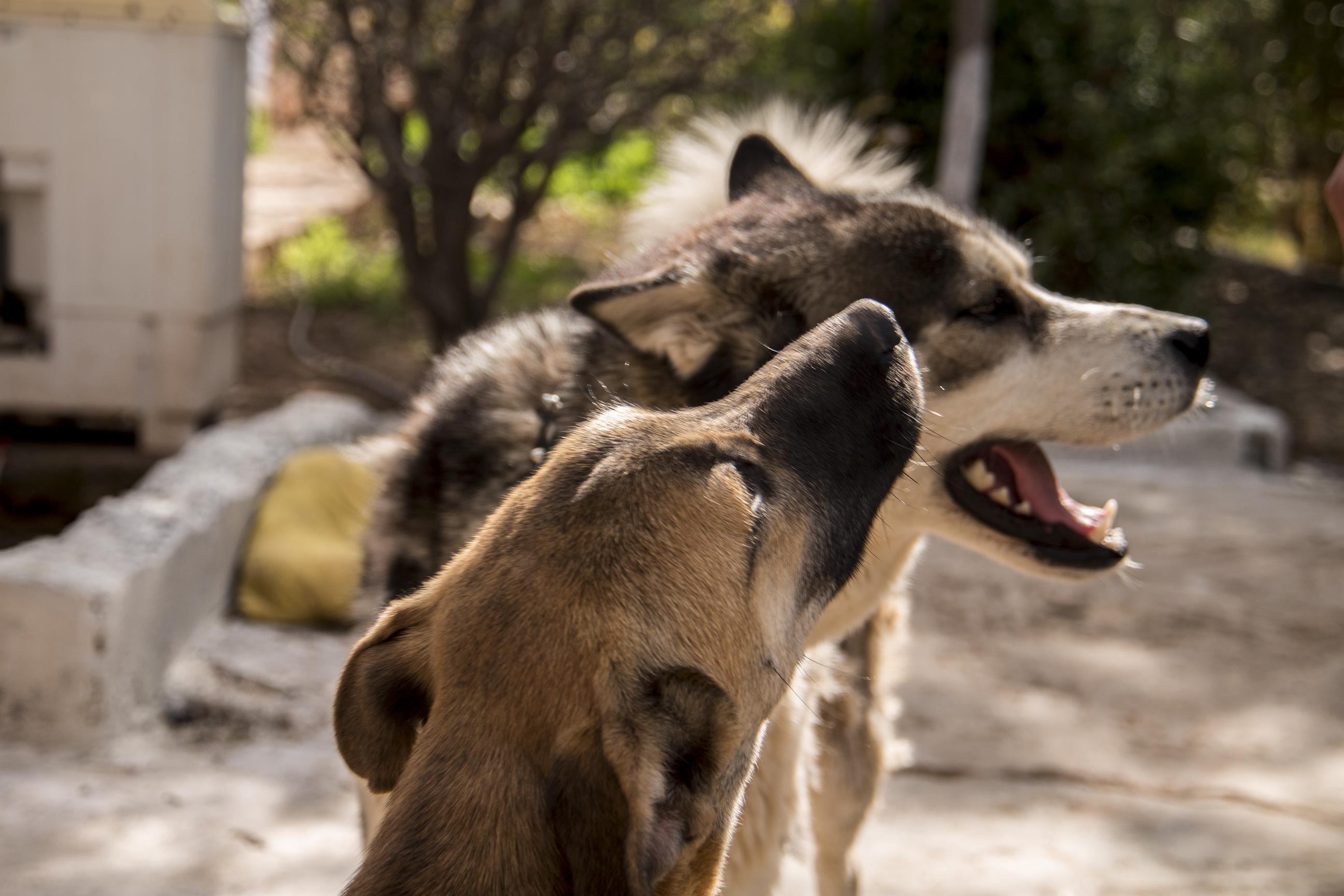 Pension pour chien Dog Universe Marrakech