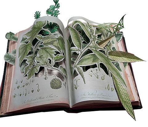TREE BOOK.jpg