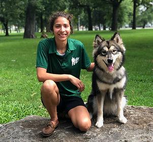 Husky wolf mix tulsa dog trainer