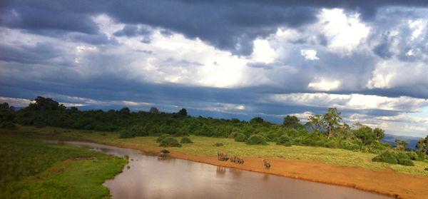 Watering hole, Kenya