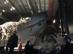 Tyrannosaurs - Meet the Family
