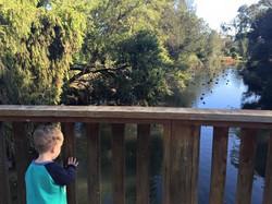 Edwards Lake Reserve