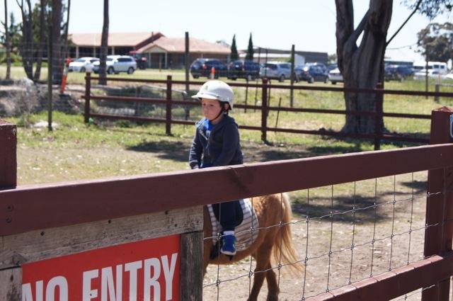 Animal Land Farm