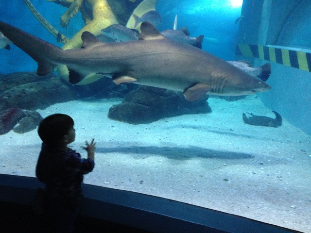 sealife aquarium, melbourne with kids