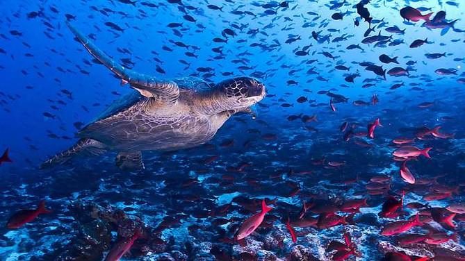 Celebra fin de año en Galápagos