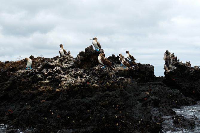 ¡Atención!  Antes de ir a Galápagos…