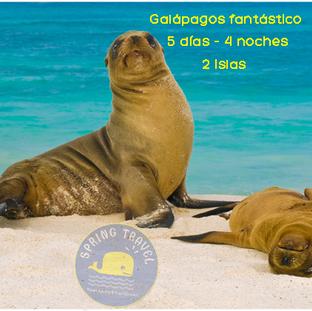 Lobitos en Galápagos
