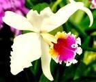 Oficialmente Ecuador es el país de las orquídeas