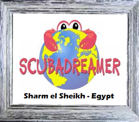 """Diving di riferimento a Sharm el Sheik e sede distaccata di Cologno Sub in Egitto; Per tutto l'anno i nostri soci potranno ricevere il trattamento """"gruppo"""" per alloggio ed immersioni, anche se viaggeranno da soli."""