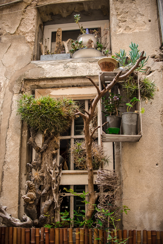 graso, kvepalu miestas, medaus menesis, gyvybes langelis, augalu gyvybes langelis, augalu prieglauda, socialinis verslas, savanoris, aiste virkete,