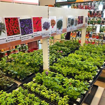 Nauja augalėlių siunta SENUKUOSE