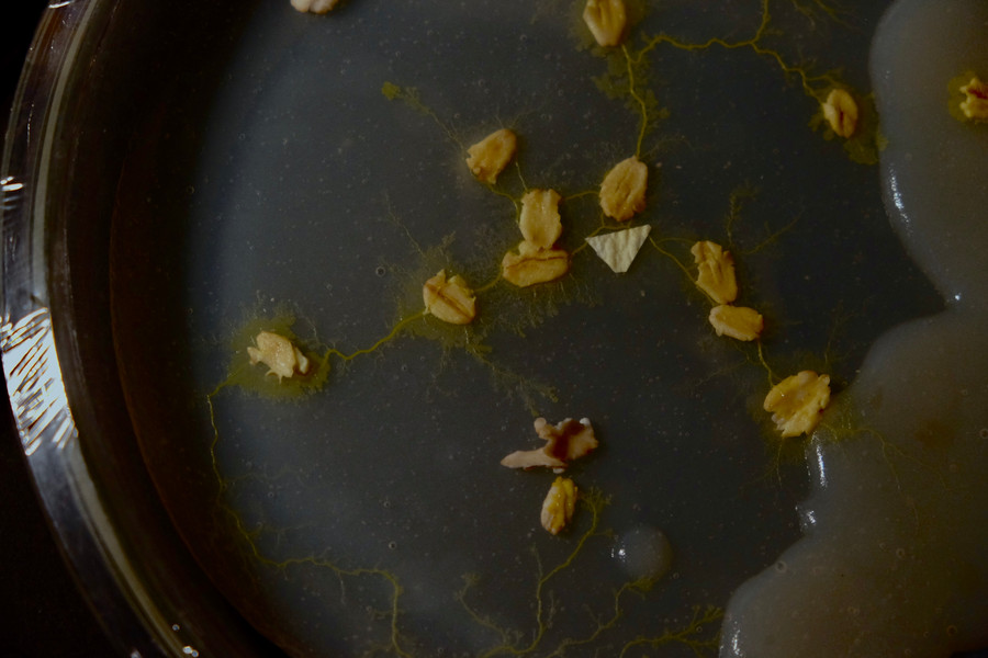 Slime Mould Documentation
